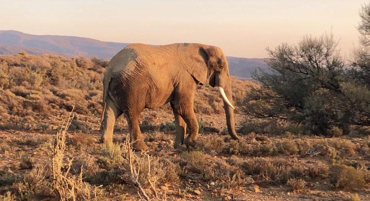 ZOGBO-ZOKO-Sénami-Afrique du sud